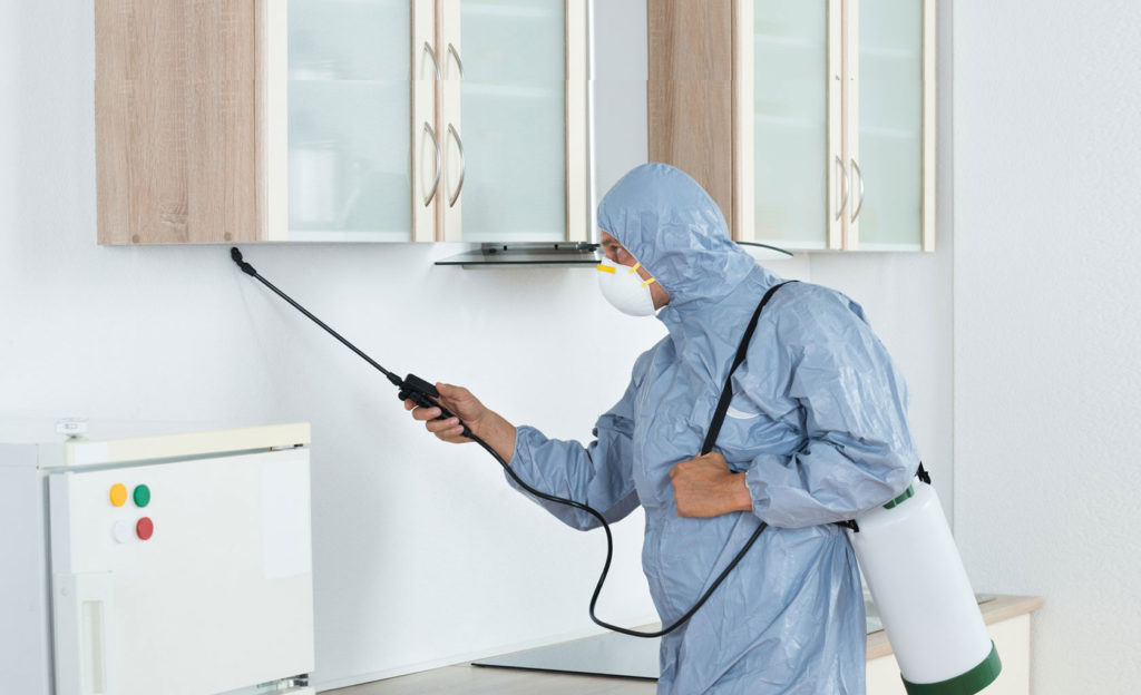 5 Benefits of Regular Pest Control Services in Toronto