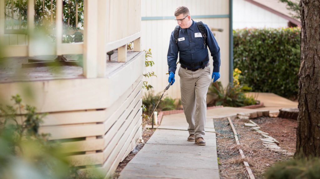 Choose Affordable And Best Services For Pest Control Gold Coast