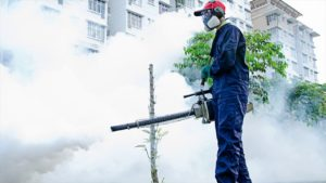 Learn How to Inspect Landscaping Trees for Pests